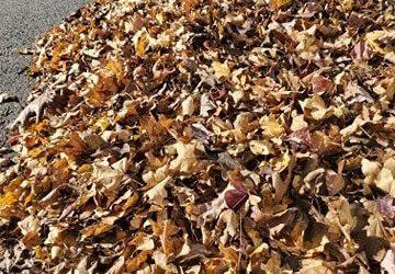 Bulk Leaf Collection Resumes October 18, 2021